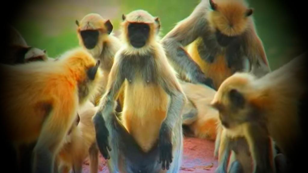 обезьяны на природе
